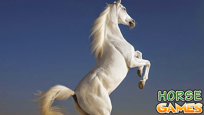 The best horse pictures