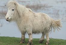24 inch Funny Pony