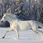 6 Most Popular Horse Myths