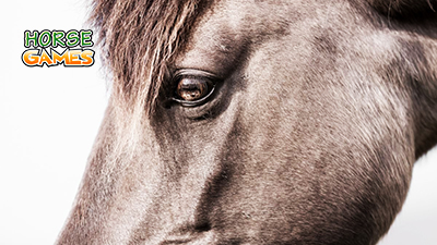 Introspective View on Horses