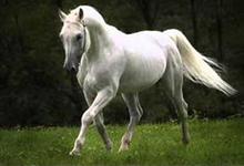 Andravida Horse