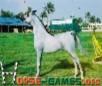 Arabian Horses 5x5