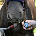 Aromatherapy for Happy and Healthy Horses