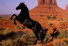 Black Horse 6x6