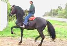 Black Horse Dancing
