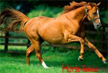 Chestnut Horse Running 6x6
