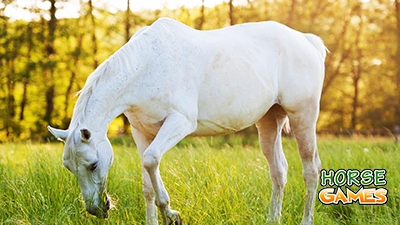 Old Horses Common Problems