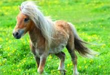 Cool Pony 6x6