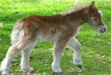 Cute Foal 6x6