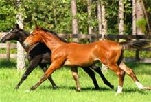 Dream Horse 6x6
