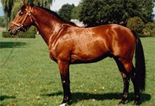Freiberger Horse