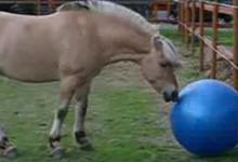 Funny Horse Plays Football