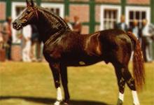 Furioso Horse