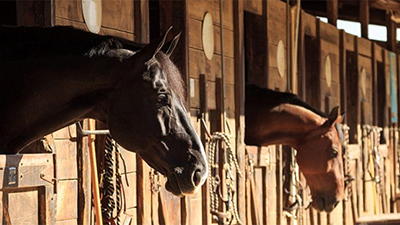 Get more info about what you need before buying a horse