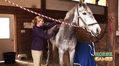 Horse Care Guide