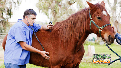 Horse Care learn the Basics