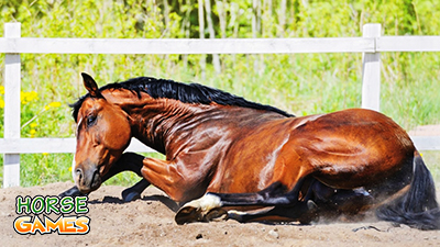Horse Colic and how to Treat Them