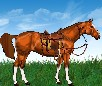 Horse Dress Up 3