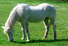 Horse Jigsaw Puzzle 1
