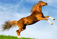 Horse Looks 6x6