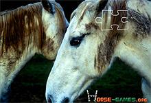 Horse Love 6x6