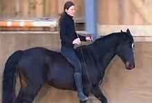 Horse in Balance