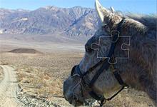 Horse in Desert 6x6