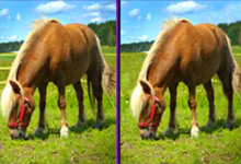 Horses Differences