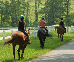 Horse riding is very popular. In addition, approaching the summer, there are many campground opportunities. Horse riding is statistically one of the most dangerous sports - twenty times more dangerous than riding a motorcycle.