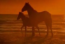 I am Horses