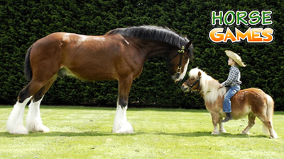 Differences Horses and Ponies