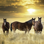 Interesting facts that you did not know about horses