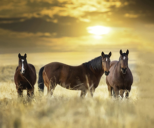 here are so many interesting facts about horses that is practically impossible to make a list of them all. Here we will make a small list of several interesting facts, in which the main actors will be the horses, of course