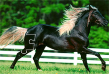 Joe Banjo Horse 6x6