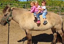 Kids Pony 6x6