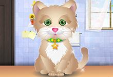 Kitty Grooming Salon