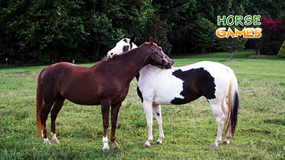 Know More About Horses