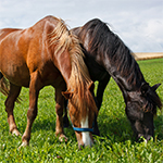 Learn all about the horse food list you must have