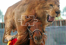 Lion Riding Horse Jigsaw