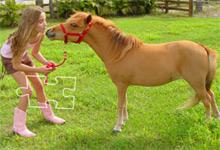 Miniature Horse 6x6