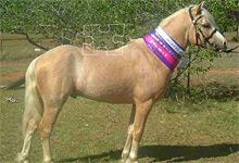 Neringa Park Pony 6x6