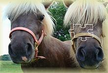 New Ponies 6x6