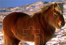 Pony Horse 6x6