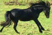 Pony Quiz