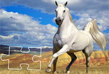Stunning Horse 6x6