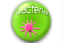 The Bacteria