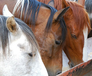In this article, we will talk about the hydration that every horse needs. We will explain why the correct amount of fluid replacement is important and what environmental factors may affect body temperature. In the article, you can read more about the sweating process and what you need to know and be careful when riding your horse during warm weather.