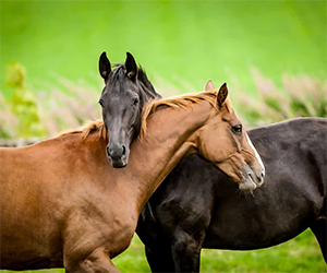 Sometimes horses too get injured. This can happen during a competition, a race, training, but it can also happen in a totally calm situation. Fortunately, most injuries can be easily treated and some herbs can reduce the rehabilitation time by up to half.