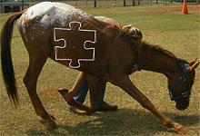 Training Horse 6x6