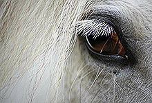 White Horses Eye 6x6